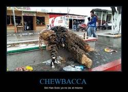 Enlace a Pobre Chewbacca