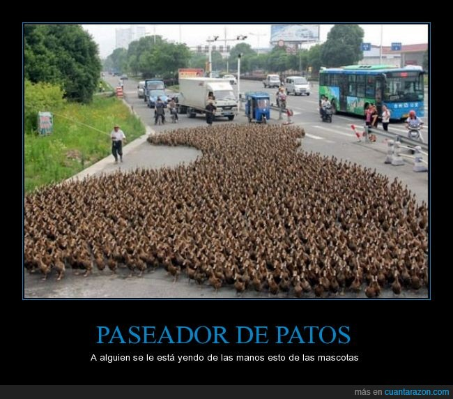 5000,animales,increible,pasear,patos