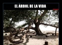 Enlace a El Árbol de la Vida es aún un misterio sin resolver... ¿Alguien tiene el número de Iker Jiménez?