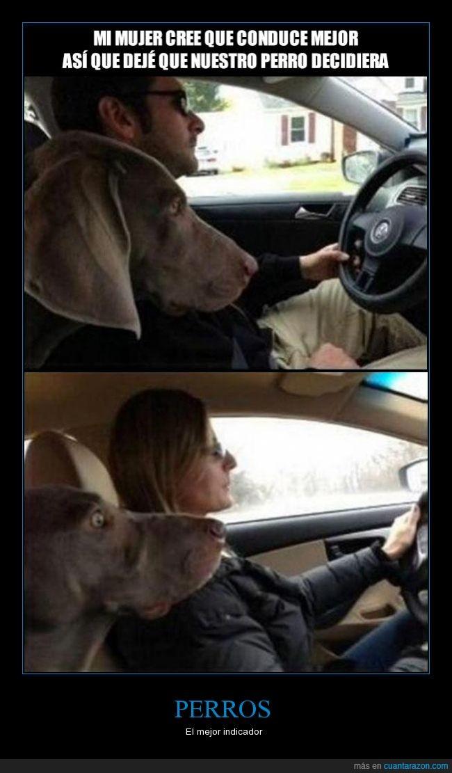 cara de miedo,coche,conducir,perro,terror