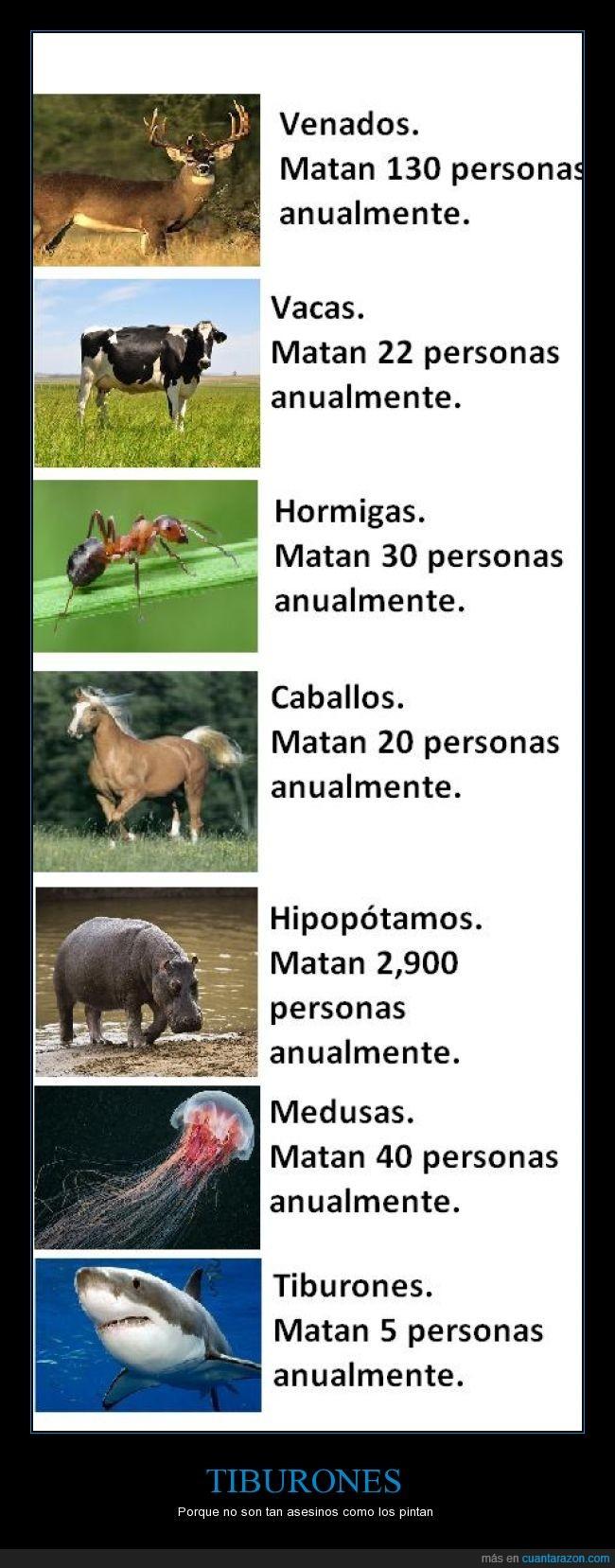 animales,caballo,hipopotamo,hormiga,matar,medusa,tiburon,vaca,venado,victima