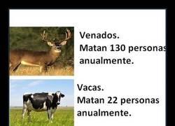 Enlace a ¿Cuáles son los animales más letales? Sin contar a tu suegra