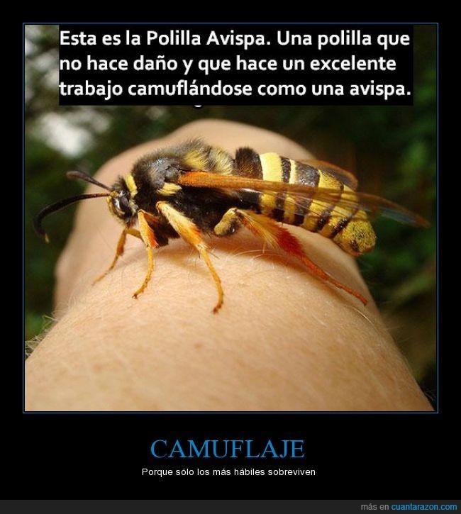 avispa,camuflaje,genia,insecto,inteligente,polilla,sobrevivir