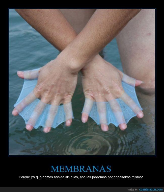 amfibio,animal,mano,membrana,nadar,rana