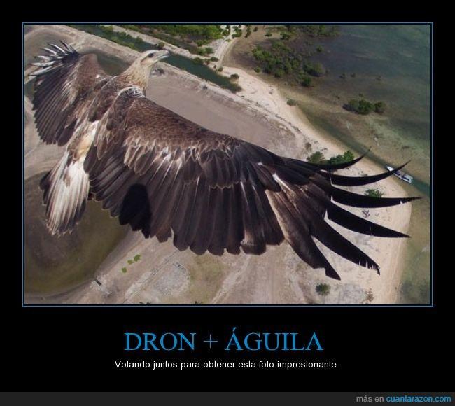 aguila,ave,camara,dron,foto,volador,volar,vuelo