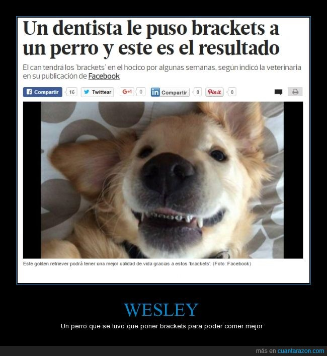aparatos,brackets,dientes,golden retriever,perro