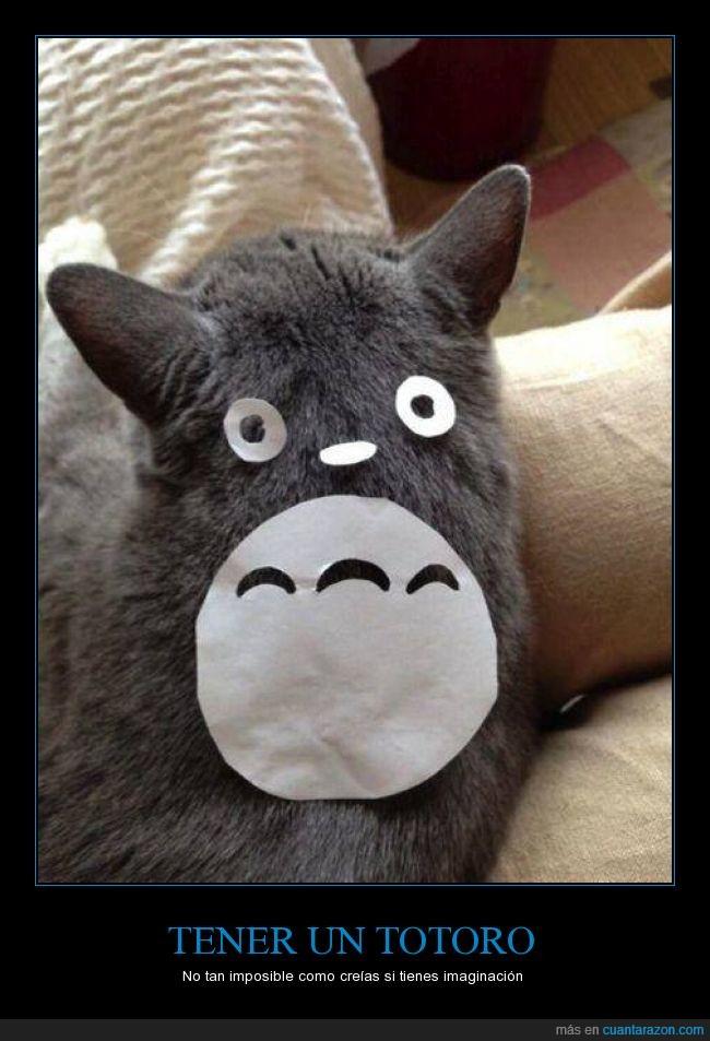 gris,pelo,totoro gato,vecino