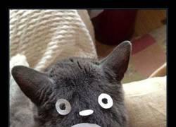 Enlace a Siempre quise tener un Totoro. Algo es algo...
