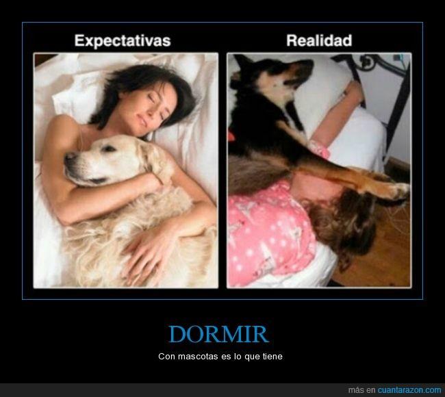 cama,comodo,dormir,incomodo,mascota,perro,tirar