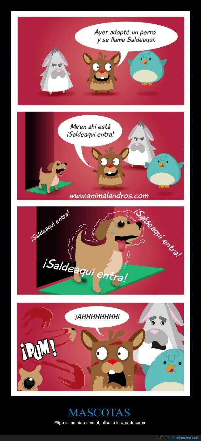Animalandros,explosión,mascotas,muerte,nombres,nombres de mascota