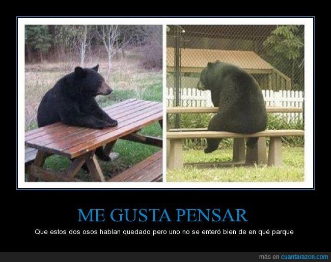 error,mesa,oso,quedar,sentado,sentar