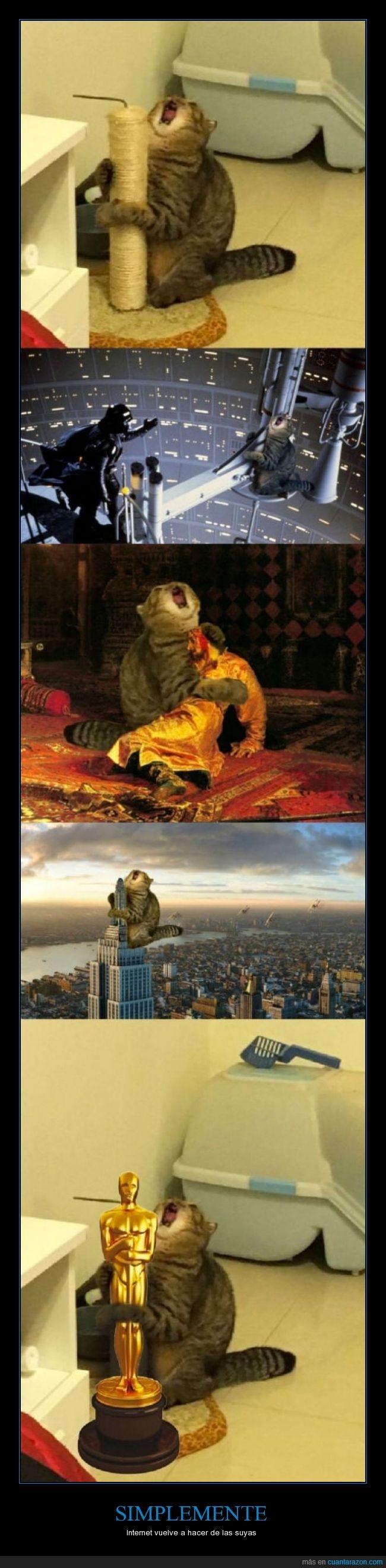 cuadro,gato,grito,Ivan el terrible,oscar,star wars