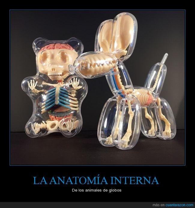 anatomía,animal,arte,globo,huesos,interna,proyecto