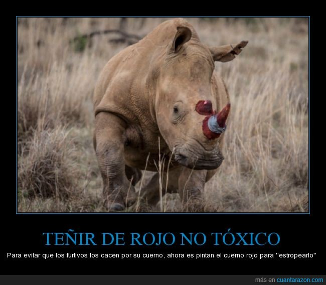 cazador,estropear,furtivo,proteger,rinoceronte,rojo,teñir,tinte