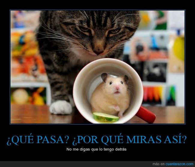 gato,hamster,raton,taza
