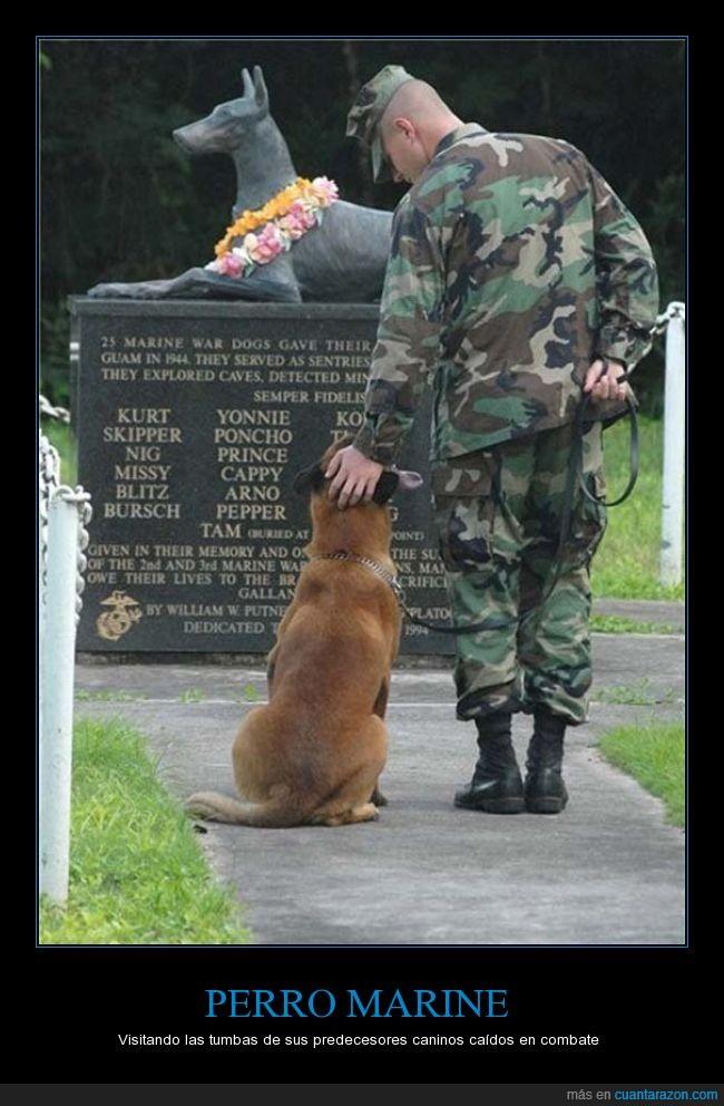 genial,marine,memorial,perro,soldado,tumba