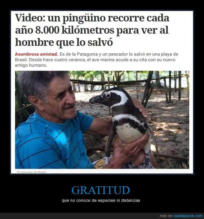 argentina,brasil,magallanes,patagonia,pingüino