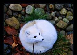 Enlace a Espectacular la belleza del zorro ártico