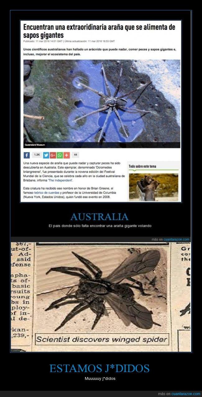 alas,araña,araña con alas,Australia,corramos,gigante,voladora,volar