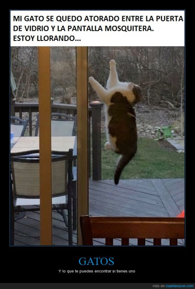 atrapado,gato,llorando de risa,o no,pillado,puerta