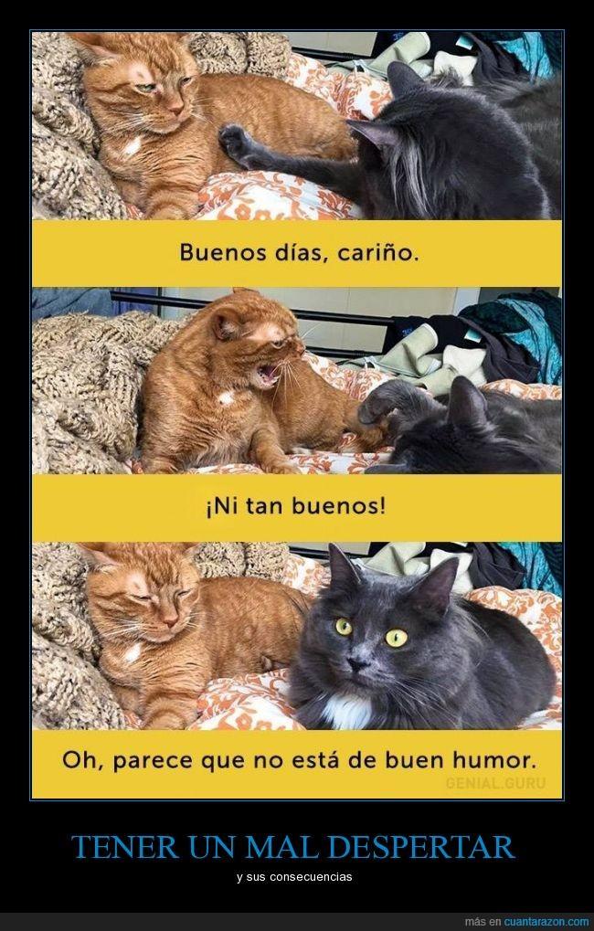 buen humor,buenos días,cariño,gato,hombre,mujer,novia,novio,pareja