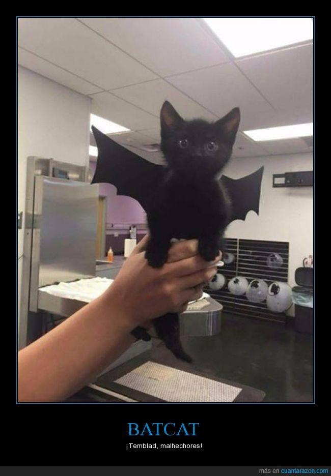 batcat,batman,gato,No sé si es un murciélago o Desdentao'...