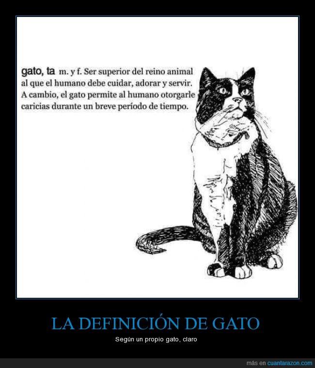 definción,gato,humano,mandar,ser,superior,tiempo