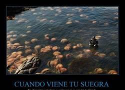 Enlace a Eso que se ven son medusas...