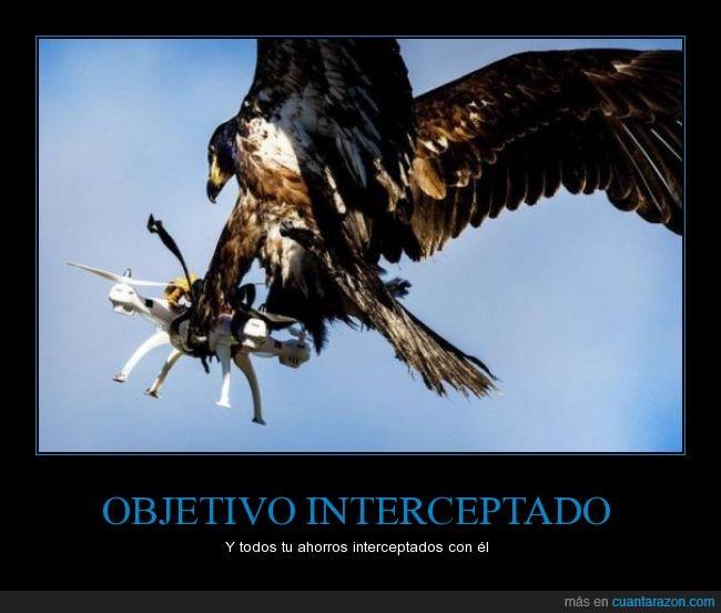 aguila calva,destrozar,dron,interceptar,vuelo