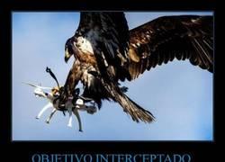 Enlace a Entrenaré a águilas para que destrocen los drones de mis enemigos