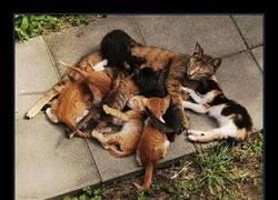 Enlace a Una curiosidad sobre gatos que quizá ignorabas (yo por lo menos sí)