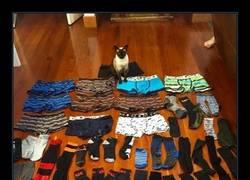 Enlace a El gato que roba calzoncillos, como el maestro de Ranma