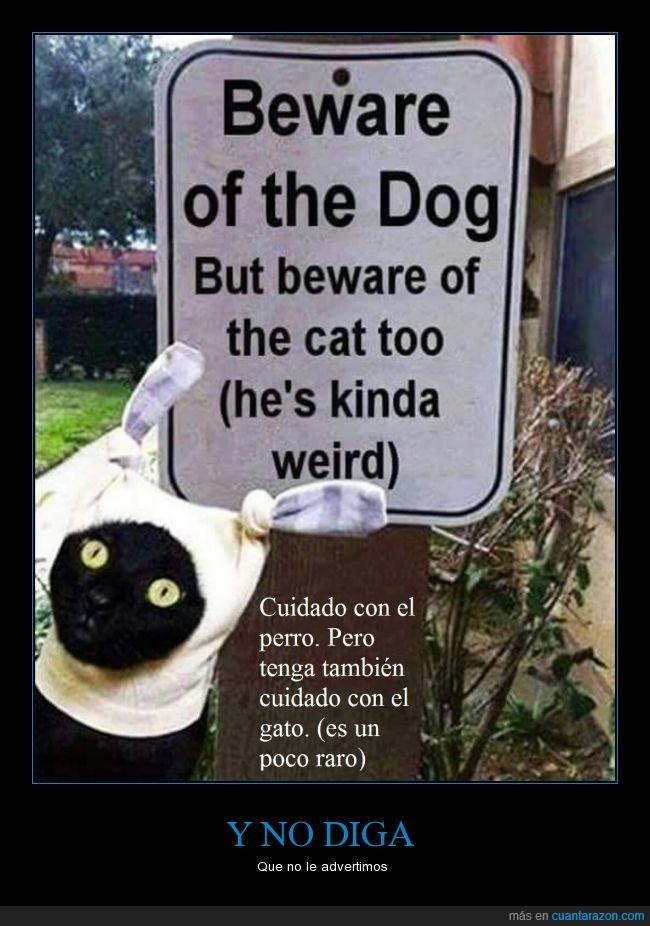 aviso,cuidado,gato,perro,raro