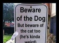 Enlace a Cuidado con el perro. Y con el gato.