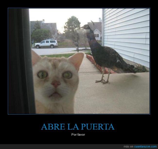 abre,abrir,aterrorizado,gato,miedo,pavo real,puerta,puerta de vidrio