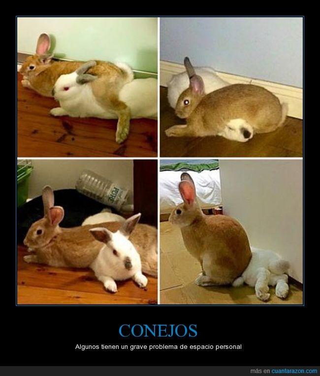 cercano,conejo,conejos,espacio,genial,personal