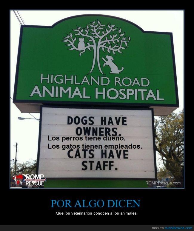 amo y señor,dueño,empleado,gatos,mascota,perros,staff