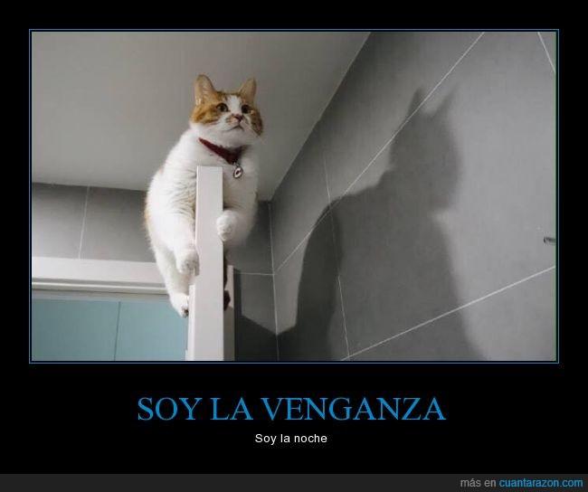 batcat,Batman,gato,puerta,sombra