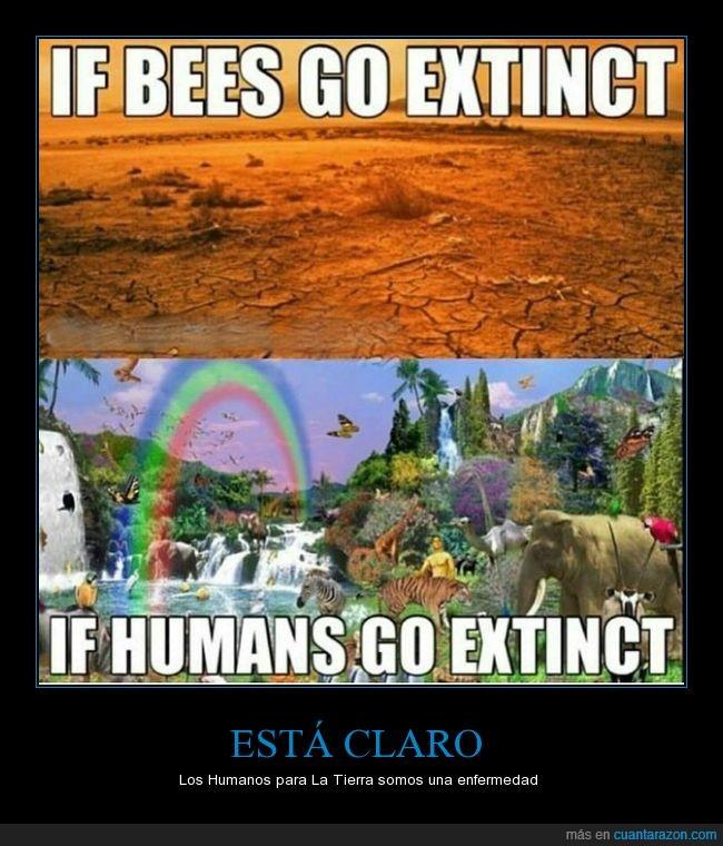 abeja,alegría,animal,enfermedad,extinción,humano