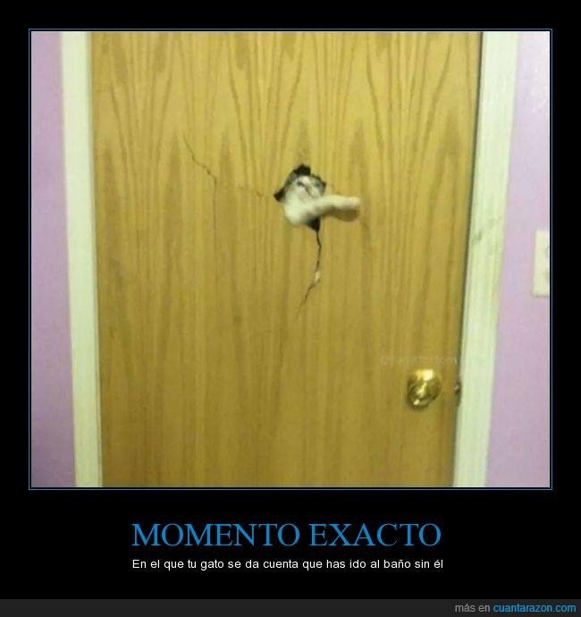 asesino,baño,gatos,puerta,romper,roto