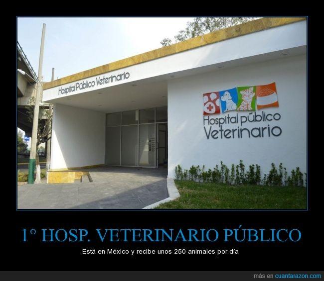 Animales,esperemos muchos más,hospital,primero,veterinario