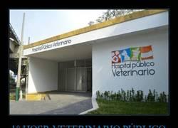 Enlace a El primer hospital veterinario del mundo... ¡Por fin!