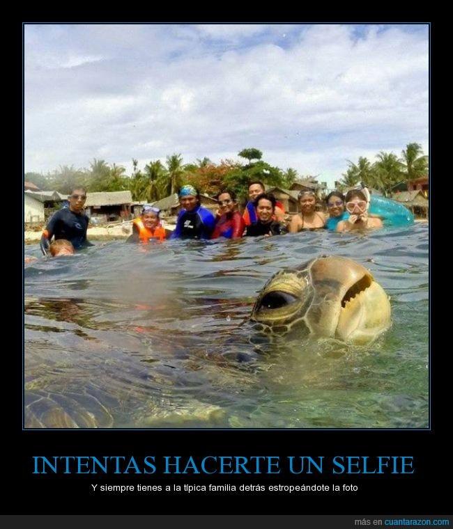 agua,familia,photobomb,selfie,tortuga