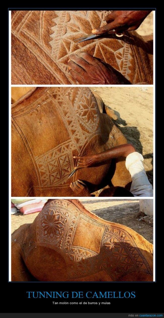 camello,dibujo,Pelo,representación