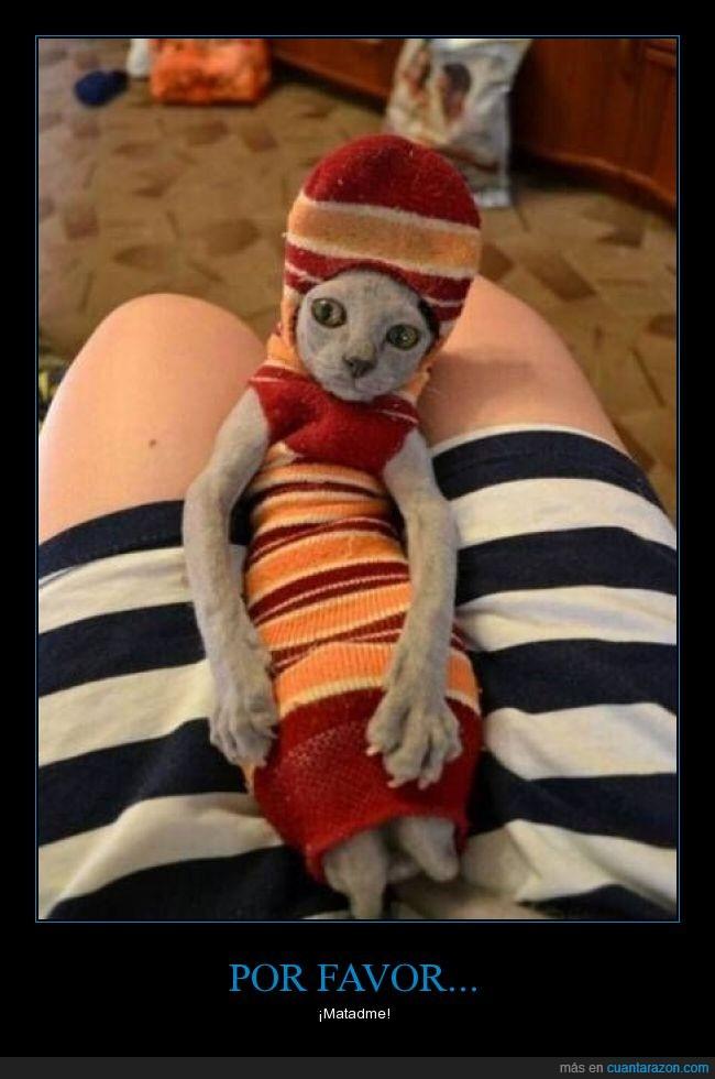 calcetin,felino,gato,matame,tejido