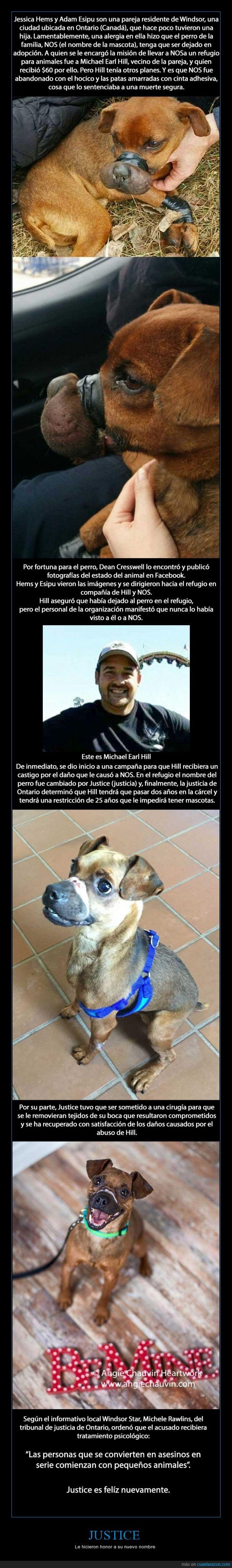 abandonar,donar,justice,Michael Earl Hill,perro,rescate,salvar