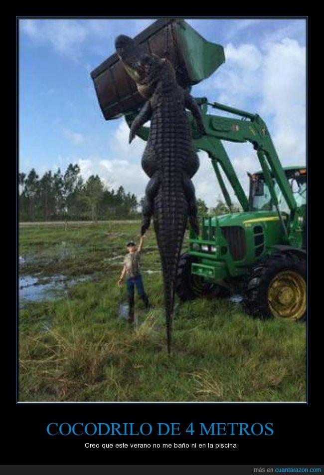 agua,animal,cocodrilo,cocodrilo rex,enorme,gigante,grande