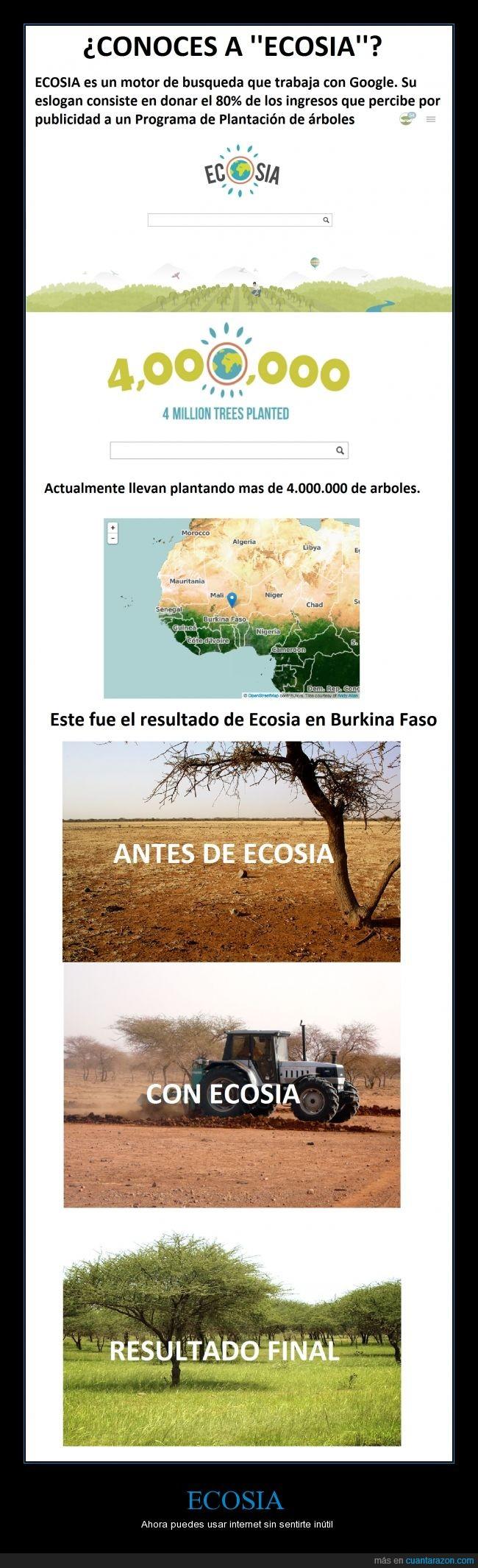 Arbol,Biodiversidad,Ecosia,Plantación,Sequia