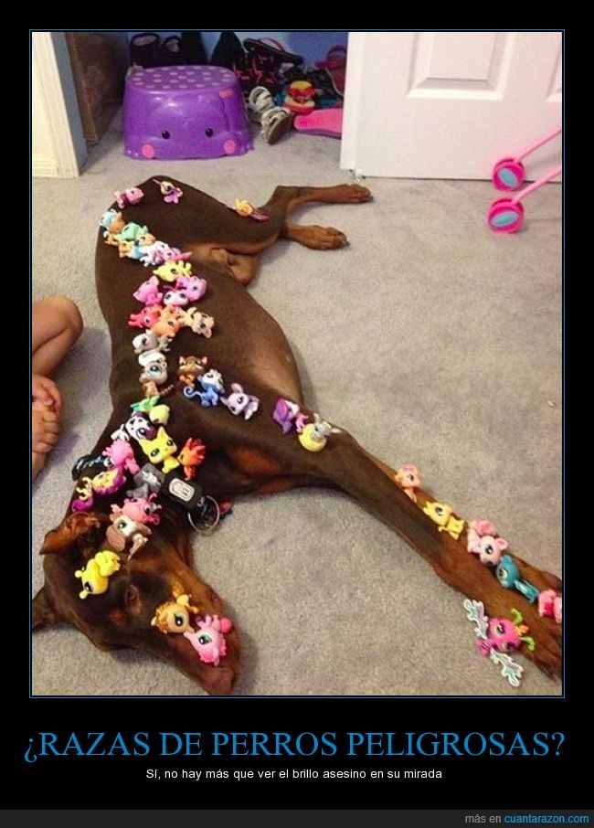 Doberman,hija,jugar,juguete,muñecos,niña,paciencia,peligro,peligrosa,perro,raza