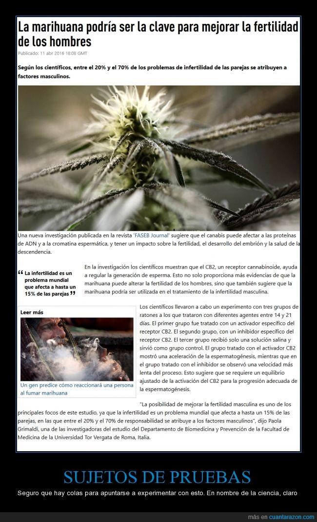 experimento,humano,infertilidad,marihuana,medicinal,ratones